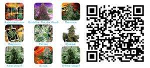 budda-seed-yerbaguena-grow-shop-online