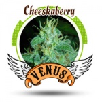 Cheeskaberry - Venus -