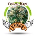Critical Haze - Venus -