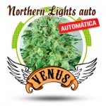 Northern Lights auto -Venus-
